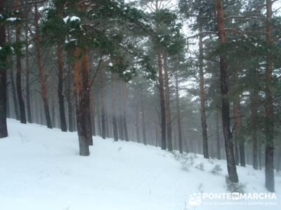 Pinar Garganta de los Montes - trekking y aventura; castillo de coca